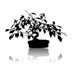 Realistic black bonsai tree isolated on white background eps10