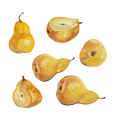 This is my watercolor pears illustration isolated on white background