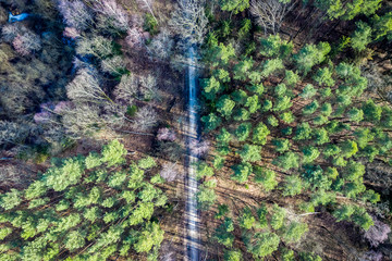 Flying above wonderful forest with multicolored trees, Poland