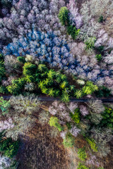 Aerial view of amazing multicolored forest with road, Europe