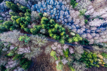 Aerial view of wonderful forest with multicolored trees, Poland