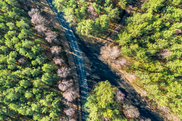 Flying above amazing forest with multicolored trees, Poland