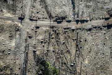 Aerial view of terrible deforestation, logging, environmental destruction, Europe