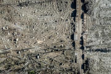 Aerial view of horrible deforestation forest for harvesting, Poland