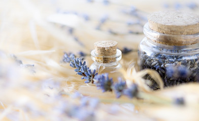 Lavender essential oil and dried lavender flowers in glass bottle.