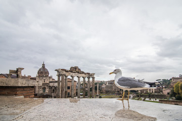 Rome, Italy - November, 2018: The bird on Roman Forum beautiful representative picture of antique ruins. The historical center of the Forever City.
