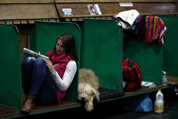 An Otterhound rests next to its owner during the third day of the Crufts Dog Show in Birmingham