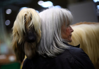 An Afghan Hound stands with its owner during the third day of the Crufts Dog Show in Birmingham