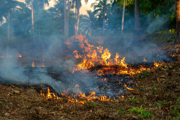 Bush fire in tropical forest in island Koh Phangan, Thailand, close up Wall mural