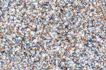 Panoramic top view of many shells on a beach.