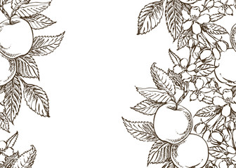 Apple illustration. Hand drawn patterns with textured apple illustration. Card spring. Black and white blooming branches of apple tree.