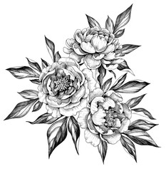 Hand drawn  Peony Flowers Bunch