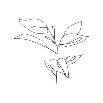 Plant leaves continuous line drawing. One line . Hand-drawn minimalist illustration, vector.