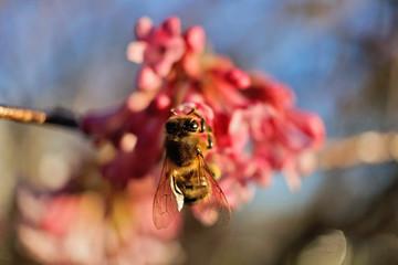 Insekt - Biene