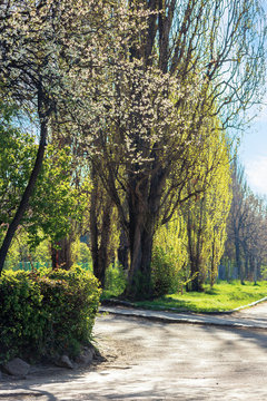 park in blossom. beautiful urban scenery in springtime