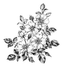 Hand drawn Bunch of Wild-Rose Flowers