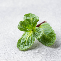Fresh mint greens with drops, macro shot, close up on grey background