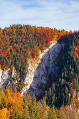 forested mountain with cliff in autumn. beech and spruce trees on a steep slope. beautiful nature scenery in evevning