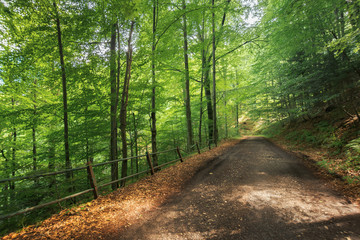 old gravel road through beech forest in mountains. beautiful summer scenery. broken metal fence along the edge of a hill