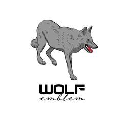 Isolated grey wolf walking.