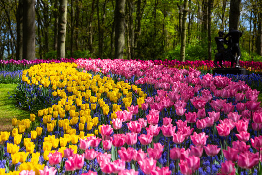 Tulip bloom in Keukenhof Flower Garden, the largest tulip park in the world. Colorful blooming fields and flower alleys, The Netherlands, Holland, Lisse, Europe.
