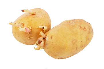 Potato with sprout