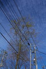 電線に掛かる樹木