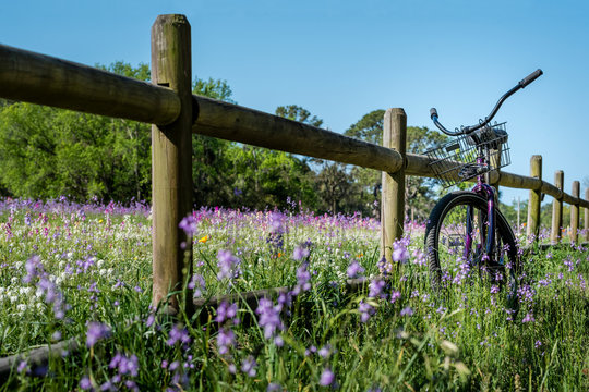 Field of purple flowers with bicycle on wood fence