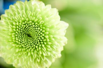 Soft green flower background