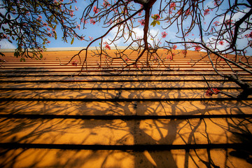 beautiful light and shadow with blooming of frangipani flower over yellow home roof