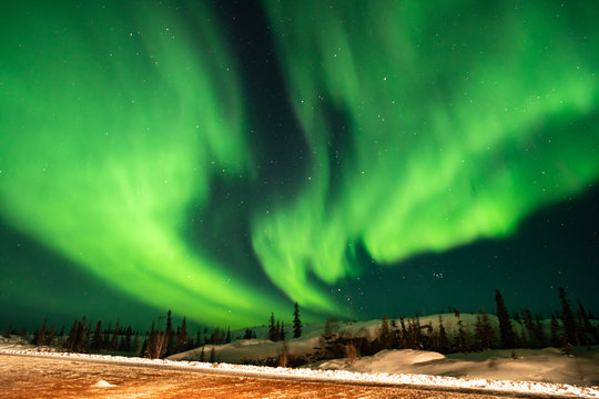 Northern lights (Aurora borealis) with starry sky above forest, Yellowknife, Canada