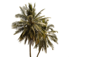 The view of the coconut trees on the seashore, white background in thailand