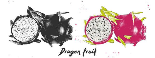 Vector engraved style illustration for posters, decoration and print. Hand drawn sketch of dragon fruit in monochrome and colorful. Detailed vegetarian food drawing.