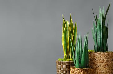 Home plants store concept