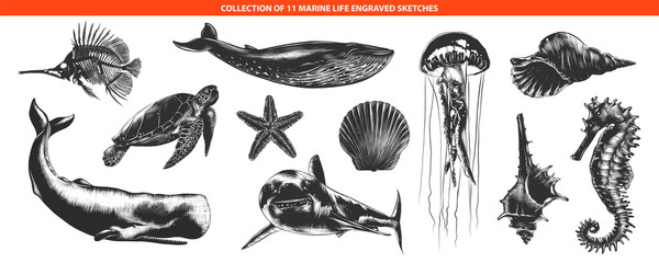 Vector engraved style sea life animals collection for posters, decoration and print, logo. Hand drawn sketches of in monochrome isolated on white background. Detailed vintage woodcut style drawing.
