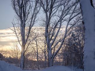 A wonderful winter landscape in beautiful Bavaria