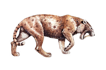 Saber tooth cat on the hunt. Animals illustration. Saber-toothed cat attack.