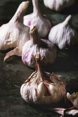 Group of fresh organic garlic bulbs clove whole and peeled over dark metal background. Close up