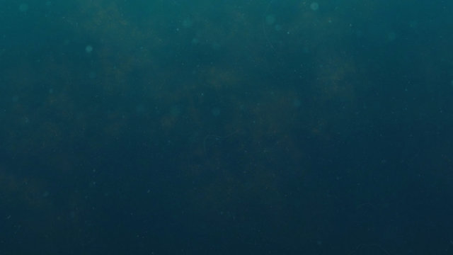 dark blue underwater background with particles hovering in the water
