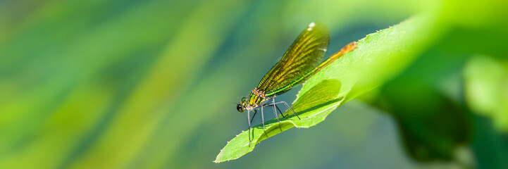 dragonfly sitting on a leaf of a plant on a sunny day.