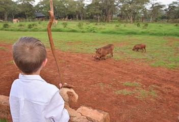 Wall Mural - boy looking at warthogs