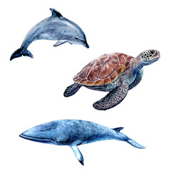 Watercolor hand drawn illustration dolphin, sea turtle, minke whale.