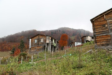 Autumn forest and village photos.artvin turkey