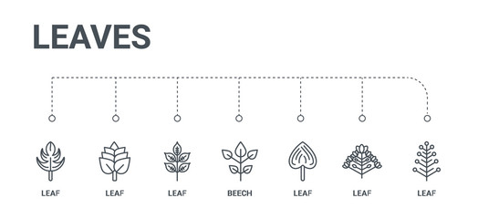simple set of 7 line icons such as leaf, leaf, leaf, beech, from leaves concept on white background