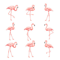 Canvas Prints Flamingo Tropical birds collection. Pink flamingos set. Fashion summer print bundle. Elements for invitation card and your template design. Vector illustration.