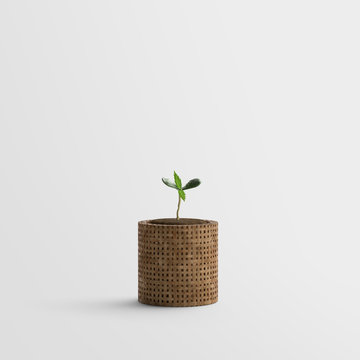 Cannabis - Marijuana Plant Sprout - Seedling - isolated