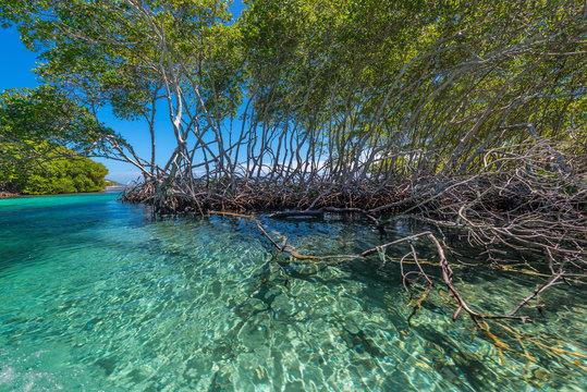 Bootsfahrt durch Mangrovenkanäle in Punta Gorda auf Roatan