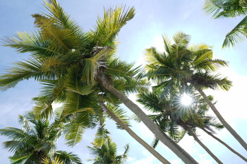 Coconut trees along Siquijor Island, Philippines with sun star effect