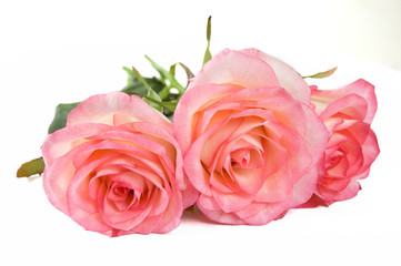 beautiful roses bunch background, mother's day concept