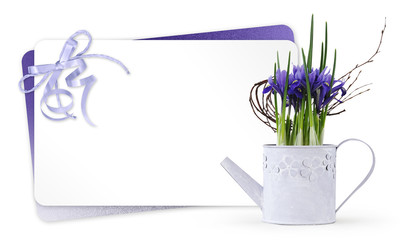 gift card and iris violet flowers plant in pot metal watering can with violet ribbon isolated on white background, florist shop or present greeting concept